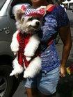 DogsLife Dog Carrier