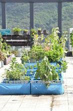 หน่อไม้ฝรั่งด้วยสีเขียวใหม่- บาร์ตารางโมดูลถุงสวน