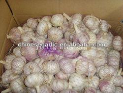 Low Price Garlic /Good Quality Garlic /normal white garlic