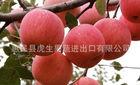 Best Price Fresh Red Fuji Apple