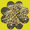 Low Price Salix alba Procyanidin (Kosher & Halal )