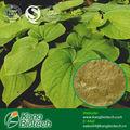 medicina de la hierba solvente polvo de la raíz de kava fiji