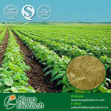 Vacuum drying plant extract fiji kava powder
