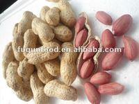 peanuts importers