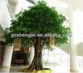 pe hojas de plátano artificial de árboles ficus árbol