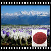 Pure Natural Saffron Powder for Saffron Buyer