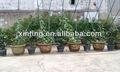jardín artificial topiary