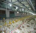 pollo automática comederos y bebederos para las aves de corral casa