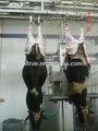 gıda makinaları ve ekipmanları sığır kesim koyun