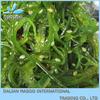 Frozen Chuka Seaweed Salad/Seasoned Seaweed Wakame (Hiyashi wakame)