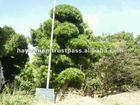Macro bonsai plants for the garden