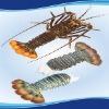 Oceancrest Tail on Raw Frozen Lobster