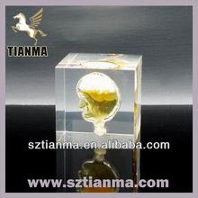 Customized acrylic resin display model head factory