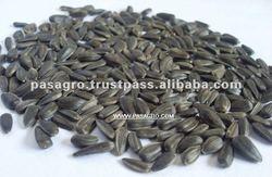 Indian Sunflower Seeds