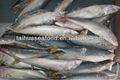 de agua dulce de calidad pescado atún caballa