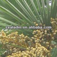 Sexual enhancer Sabal P.E/Saw Palmetto extract manufacturer (Fatty acids 45%)