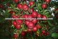 bioestimulante e crescimento da planta promotor chetana nav
