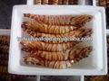 Calidad fresh seafood y camarón comida