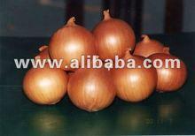 Yellow Onion [Golden onion]