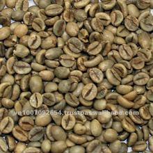 robusta chicco di caffè verde