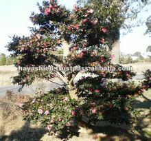 Beauty flowers in wainter garden
