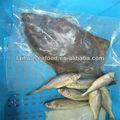 vendemos e exportaÇÃo secas filé de peixe