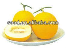 Golden melon hybrid seeds