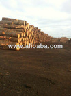 Radiata Pine logs Timber