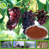 High Quality 100% Natural Grape Seed Extract Capsule