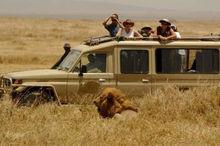 Tanzania safaris, wildlife safari adventure travel 7 days