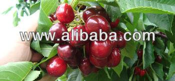 Fresh Cherries Van, bing, buggaro burlat