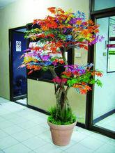 multicolored maple tree