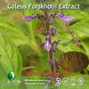 Coleus Forskohlii Extract Forskohlin in Natural raw materials