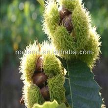 2013 Best Taste Chinese Fresh Chestnuts