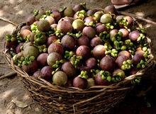 Mangosteen fresh fruit