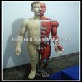 Vendas HOT 170 cm humano músculos do corpo com intenal órgãos muscular modelo anatômico