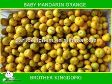 2013 new crop fresh baby mandarin from BROTHER KINGDOM