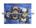 Meilleure qualité produits de la mer naturelle Frozen Soft Shell crabe