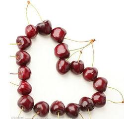 herbs extract powder Asiatic Cornelian Cherry Fruit P.E. 5:1
