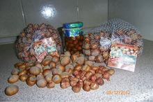 Fresh hazelnut in shell