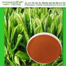 GREEN TEA EXTRACT SUPPLIER TEA POLYPHEOLS 20%-98%