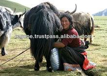 Himalayan Dog Chew/ yak Milk bone Organic products