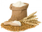 100 % pure Wheat Seeds And Wheat Flour