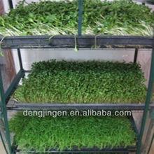 Indispensable for breeder /filter sponge