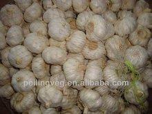 fresh garlic normal white 2013 jining new crop