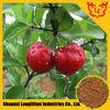 GMP,BV,Certificate Acerola Cherry Powder Extract / Malpighia glabra L.