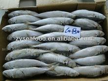 Frozen Horse Mackerel Food 60-80