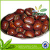 sale edible chestnuts wholesale nut snack food from best chestnut company asian food wholesale,foods rich in nitrogen