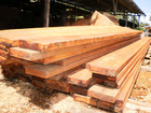 PNG Government Approved Sawn Timber Export Licence