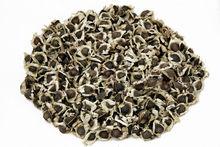 Largest Moringa Seeds Distributor in U.S
